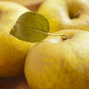mutsu apple