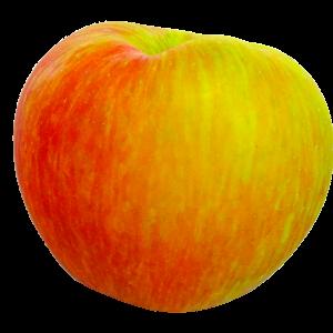 honeycrisp, apple, fruit